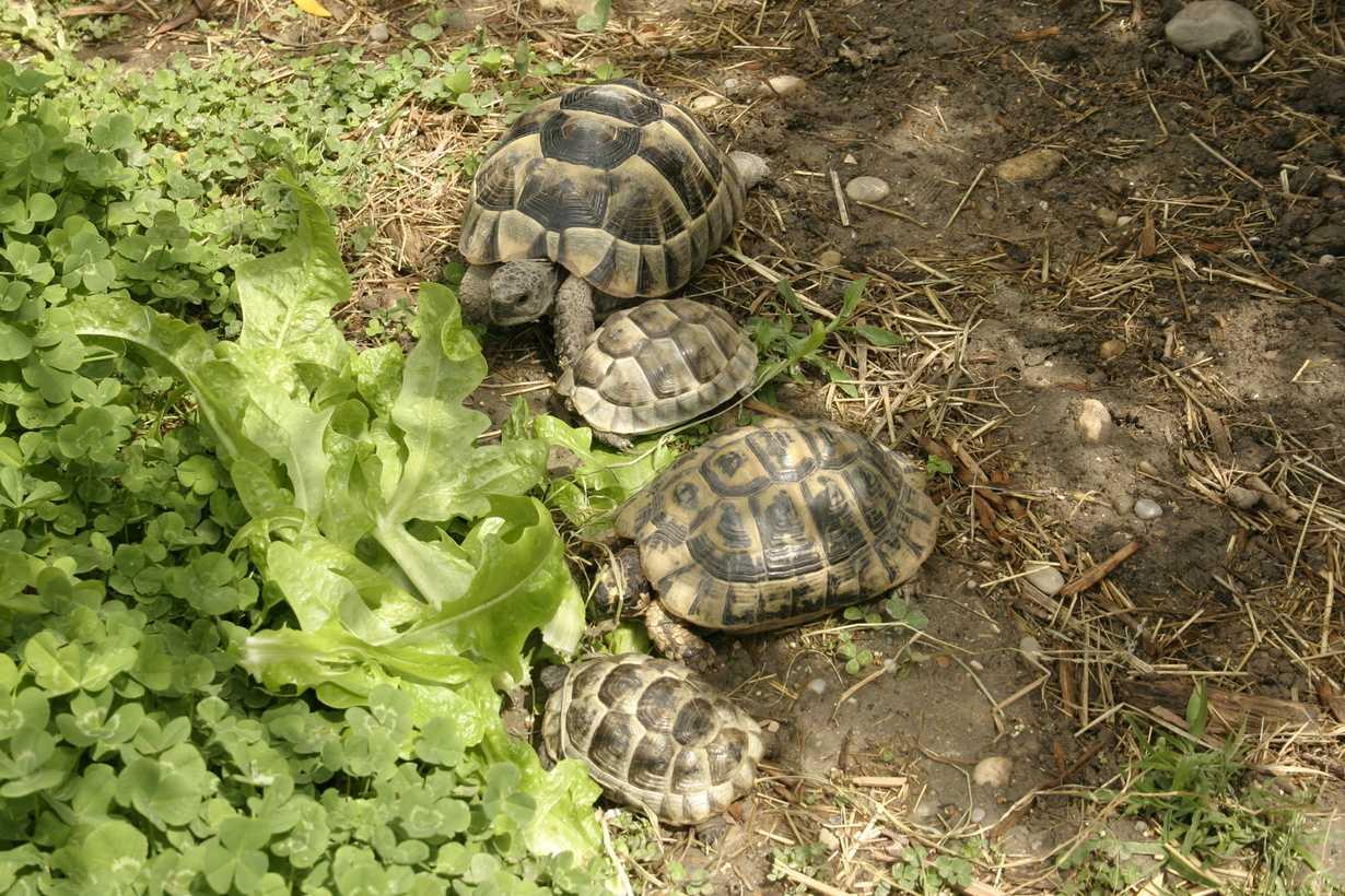 des tortues gardees par nos partenaires retraites