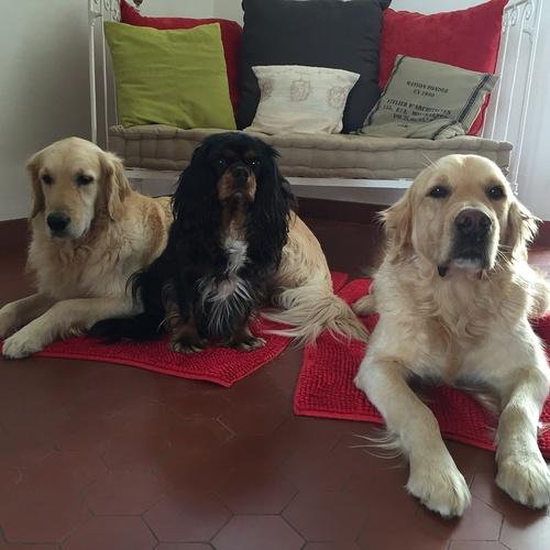 Drill, Hermès et Eliott : 3 chiens dorlotés par nos partenaires retraités