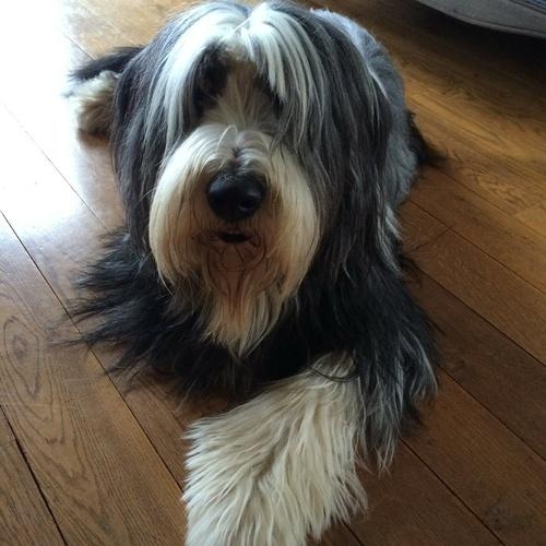 D''jack : un chien adorable