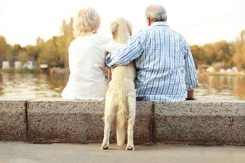 Prendre soin des animaux qui vous sont confiés
