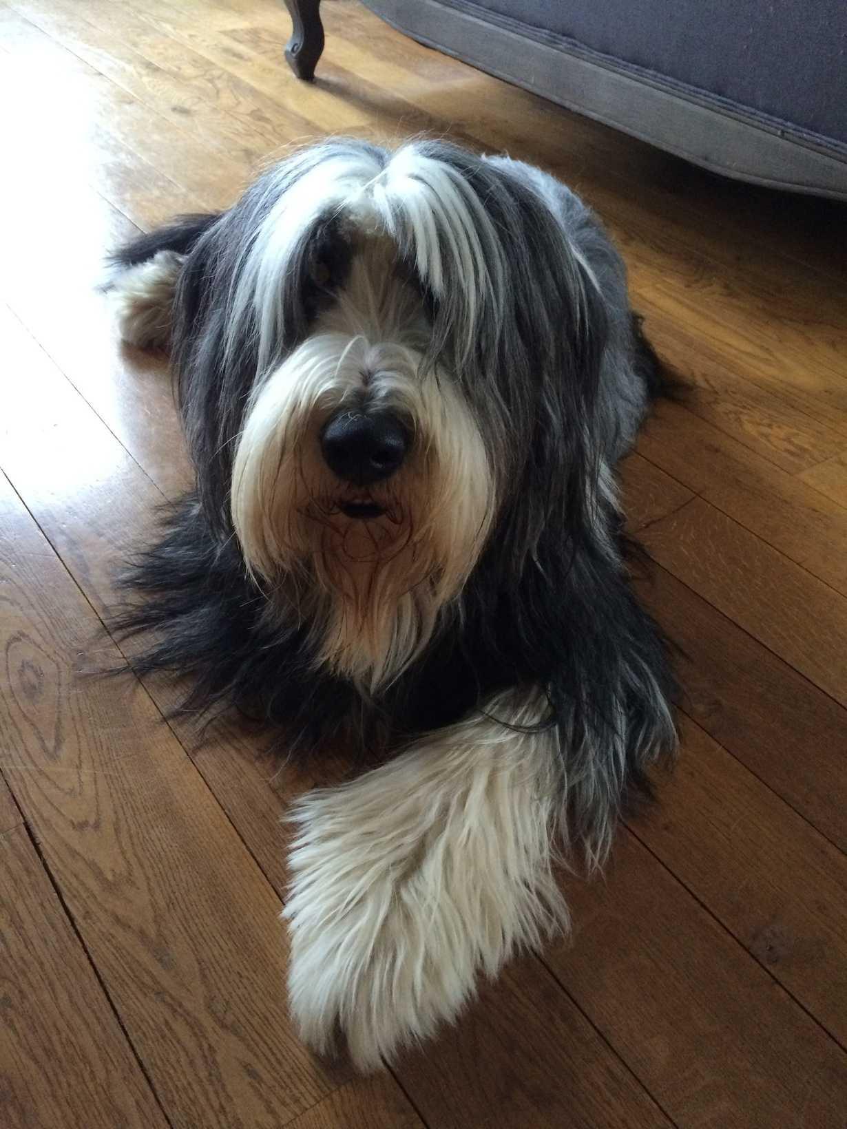 d jack : un chien adorable