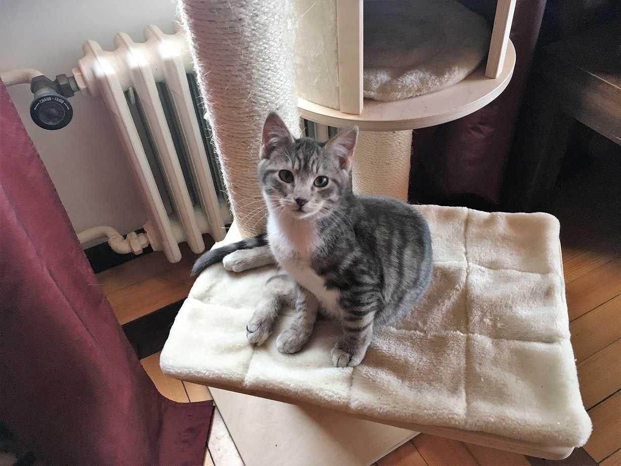 merlin, un chat doux, garde par des partenaires retraites