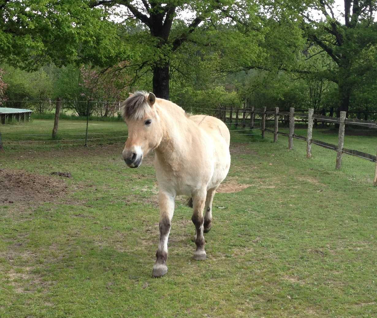 nanette : un poney caline par nos partenaires retraites