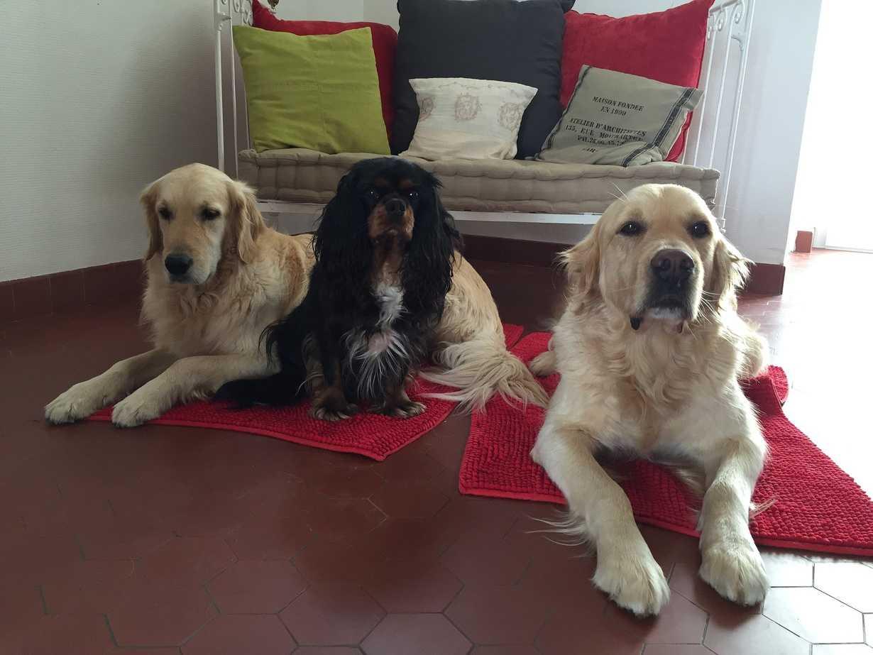 drill, hermes et eliott : 3 chiens dorlotes par nos partenaires retraites