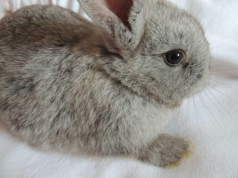 Gardiennage de maison et d''animaux dans les Hauts-de-France lapin